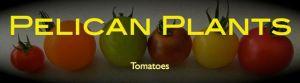 Tomato Logo.001