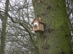 Blue Tit looking into the new birdbox - hopeful signs