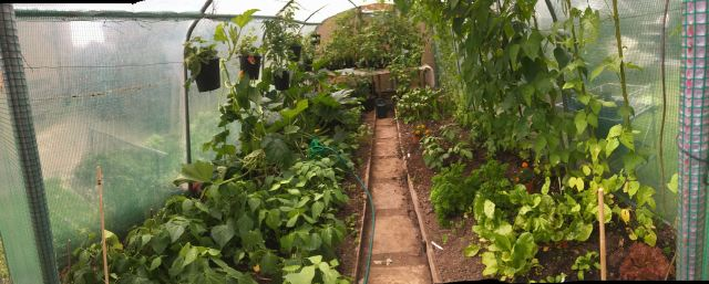 polytunnel-Early-July - 1 (1)