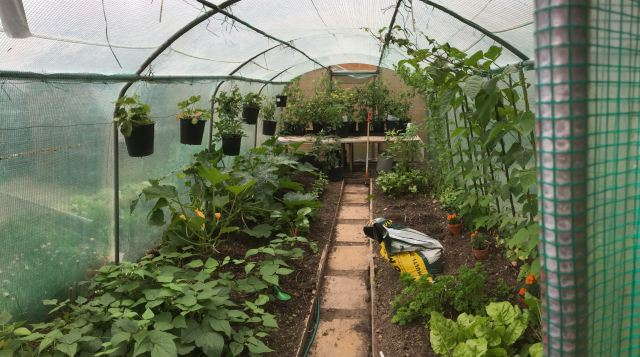 polytunnel-June